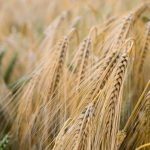 What Are Whole Grains And Why Are They Important? - Swolverine