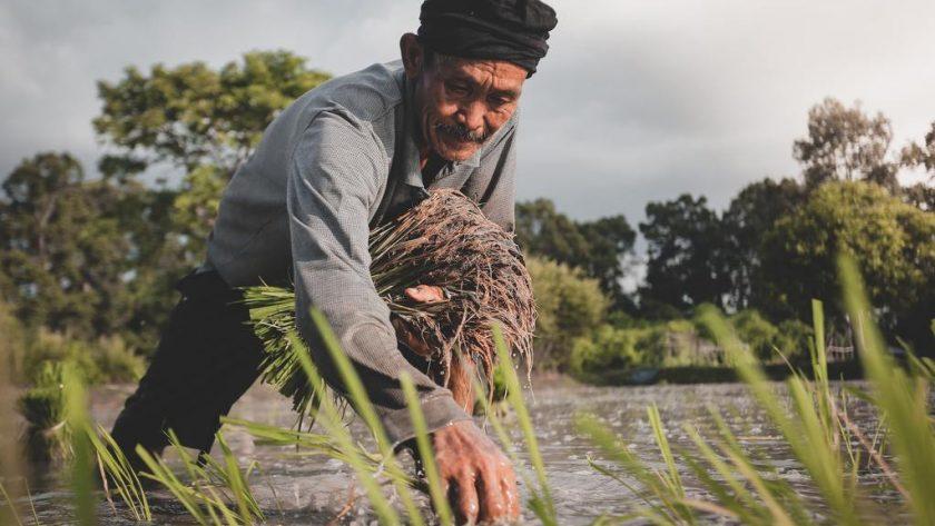Basmati Rice Vs Brown Rice - Swolverine